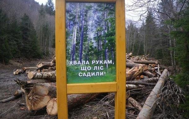 В Україні можуть почати вирубати ліси