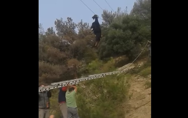 В Греции коза повисла на электропроводе