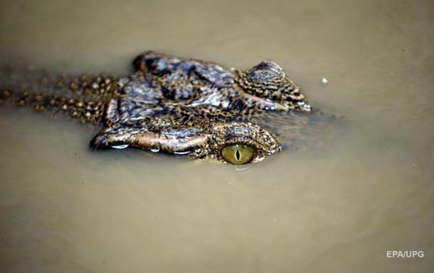 В Індонезії крокодил загриз російського туриста