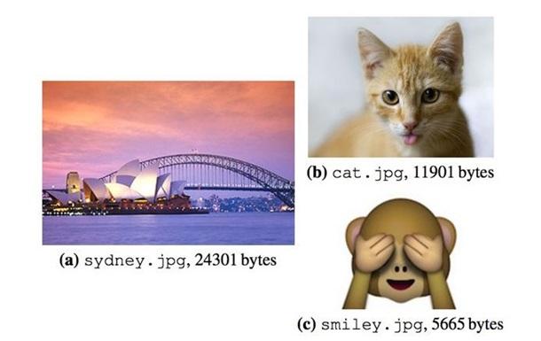 В ДНК сохранили фотографию кошки