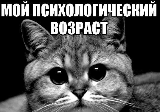 Коту все возрасты покорны