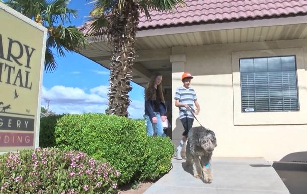 В США собака выжила после падения с 90 метров