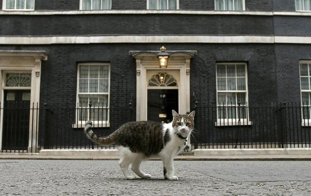 МИД Британии принял на службу кота