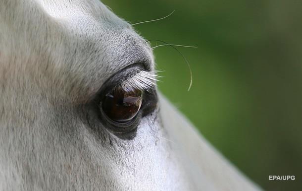 В Индии умерла искалеченная политиком лошадь