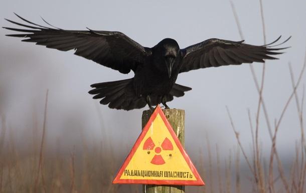 Чернобыль зона отчуждения животные