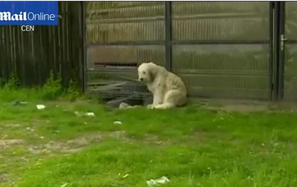 В Румынии пес пять лет сторожит дом умершего хозяина