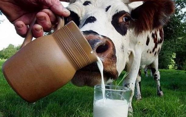 Украина на пороге молочного бунта