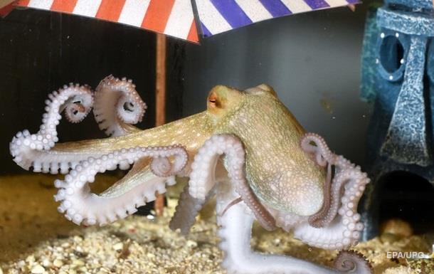 Ученые: мировой океан начали захватывать осьминоги и моллюски