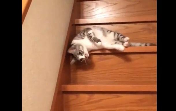 Видео с ленивым котом стало хитом соцсетей