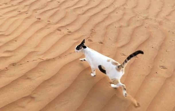 Фото  дырявого  кота покорило сеть