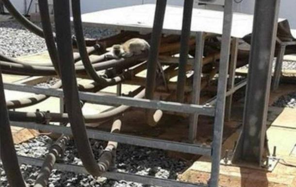 Обезьяна отключила электричество во всей Кении