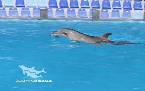 В Батуми дельфиненок родился во время шоу