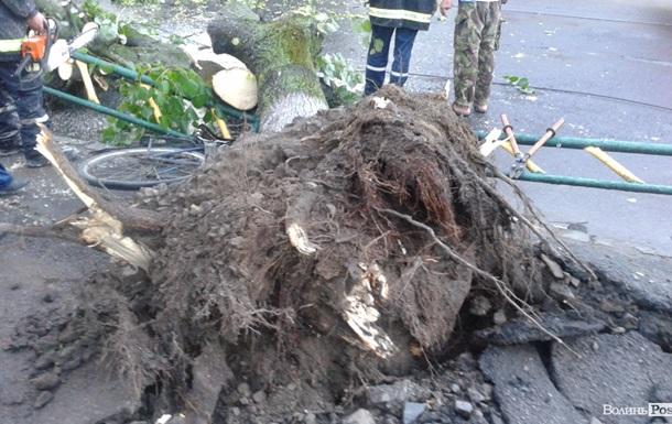 В Луцке ураган срывал крыши и валил деревья