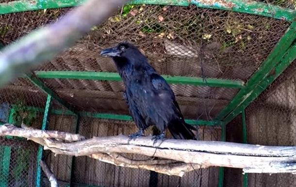 Сеть удивил говорящий ворон из зоопарка в Харькове