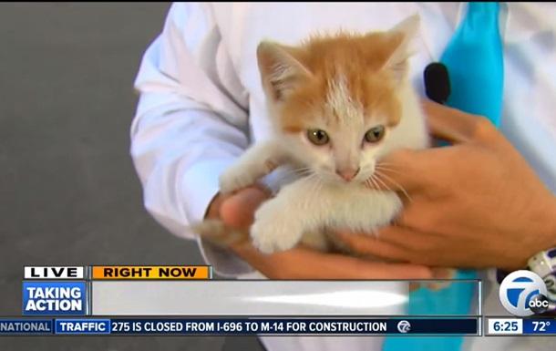 Бездомный котенок сорвал прямое включение в США