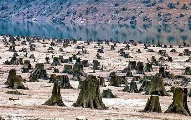 Массовая вырубка леса в Украине