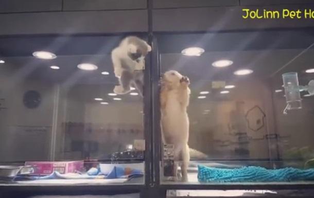 Сеть умилило видео с побегом котенка к другу-щенку