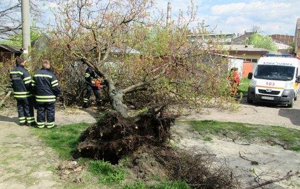 В Житомирской области упавшее дерево убило пенсионера