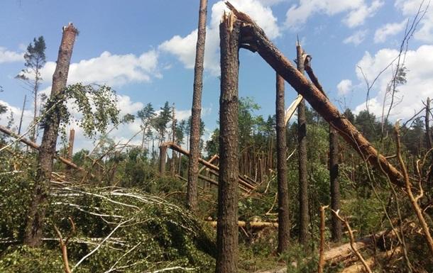 Українські ліси: які зміни очікуються у правилах санітарних рубок