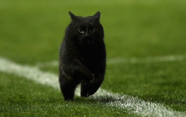 Кот на матче по регби удивил сеть