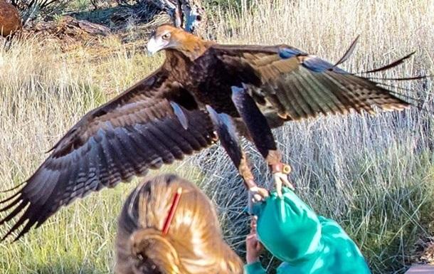 В Австралии орел попытался утащить мальчика