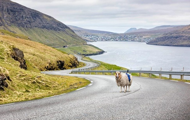 Овцы заменили Google Street View на Фарерских островах