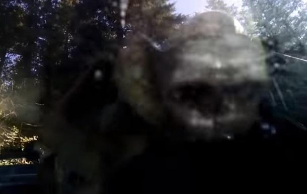 В США медведь сел в машину и закрылся