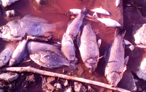 Власти объяснили загрязнение реки Стугна под Киевом