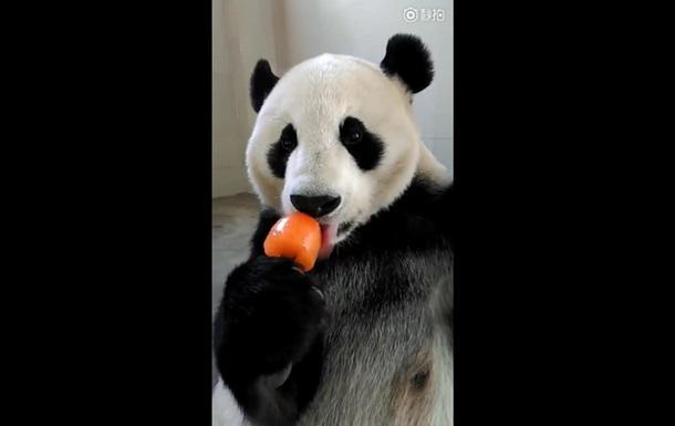 Панда с мороженым покорила пользователей сети