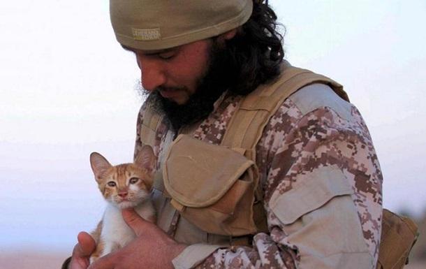 Боевики ИГИЛ взяли на вооружение котят - СМИ