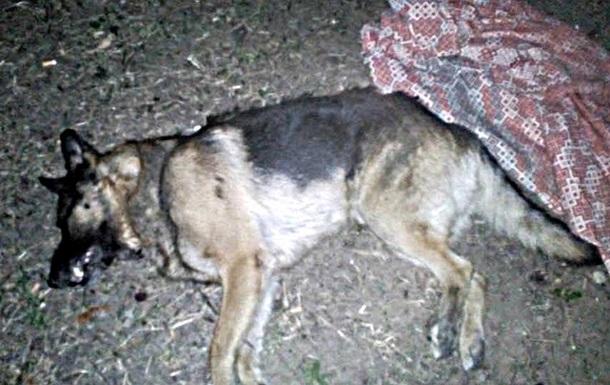 В Херсоне собаку выбросили с пятого этажа - соцсети