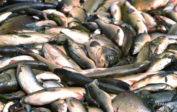 На Житомирщине зафиксирован мор рыбы