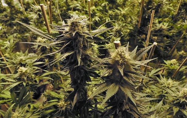 Легализацию марихуаны сдерживает  алколобби  - WikiLeaks