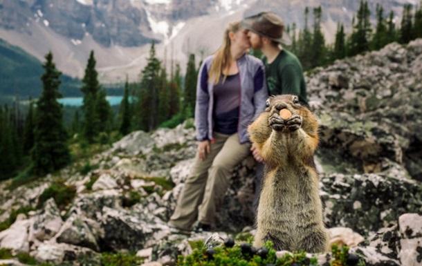 В Канаде белка испортила влюбленным фотосессию