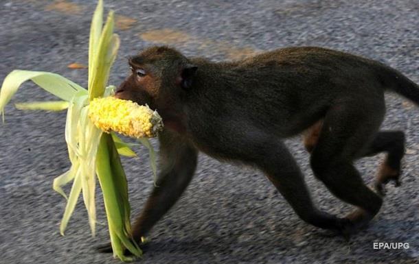 В Мариуполе обезьяна откусила палец младенцу