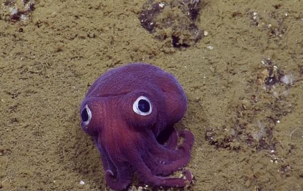 На дне океана нашли фиолетовую россию-коротышку