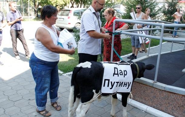 Дар Путину : в Омске оставили теленка в приемной президента