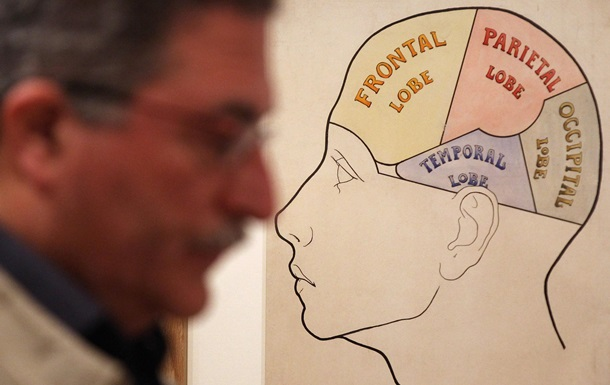 Биологи нашли простой способ улучшения памяти
