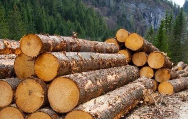 Експорт лісу як ілюстрація української колоніальності