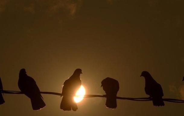 В Индии арестовали голубя за записку с угрозами в адрес премьера