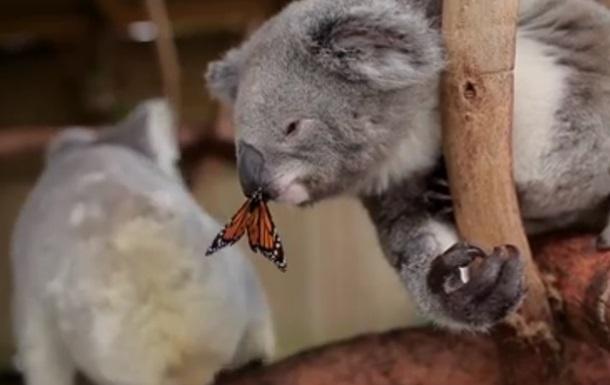 фото нос коалы