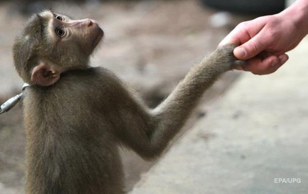 Депутаты хотят запретить фото с обезьянами