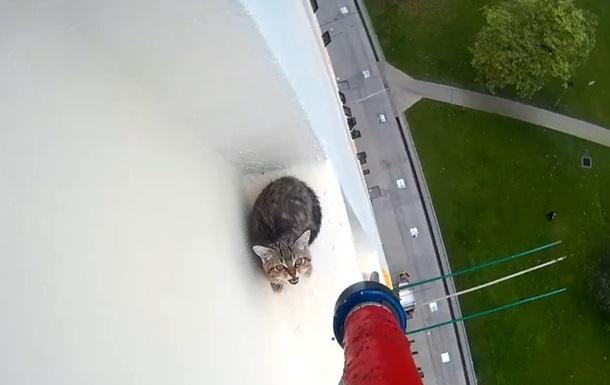 Спасение крошечного котенка с высотки тронуло сеть