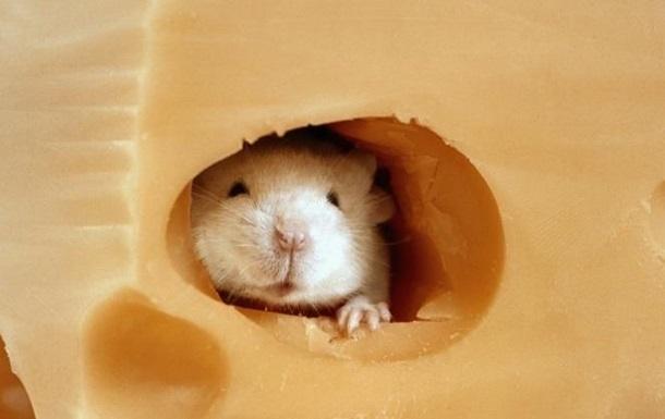 Мыши пищат по принципу реактивных двигателей - ученые