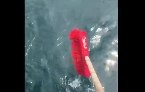 Австралиец отогнал белую акулу шваброй