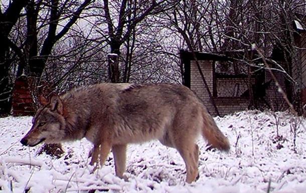 Закрытие охоты в 10 районах Харьковщины - НЕЗАКОННО.