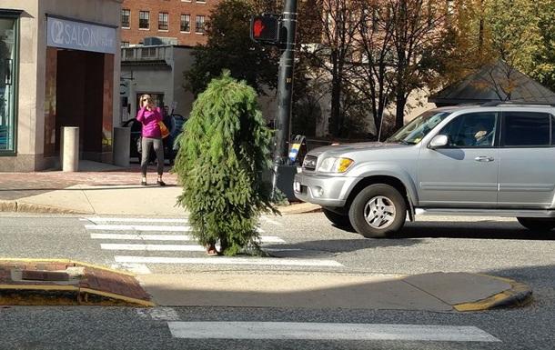 В США  человек-дерево  устроил дорожные пробки