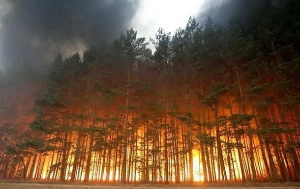 На Донбассе сгорели больше трети заповедников - экологи
