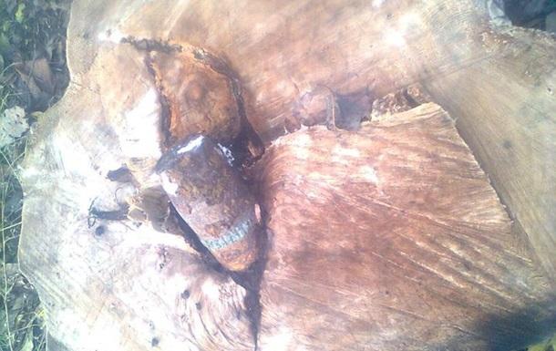 В Запорожской области в спиленном дереве нашли снаряд времен войны