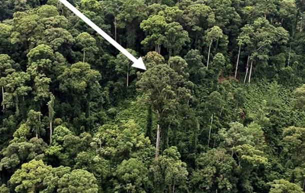 Ученые нашли самое высокое тропическое дерево в мире